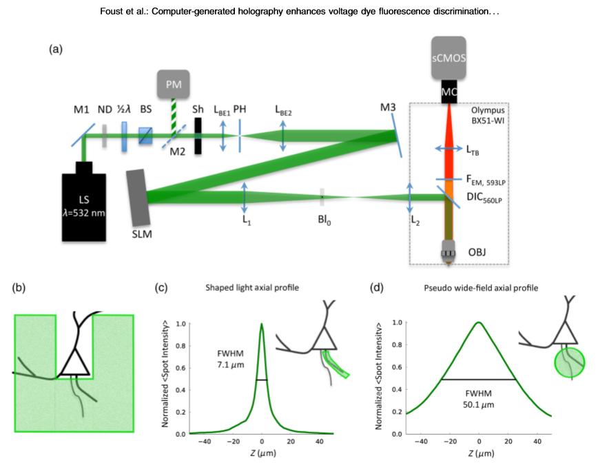 Postdoc position at Imperial College London – optics, holography, neuroscience, optogenetics