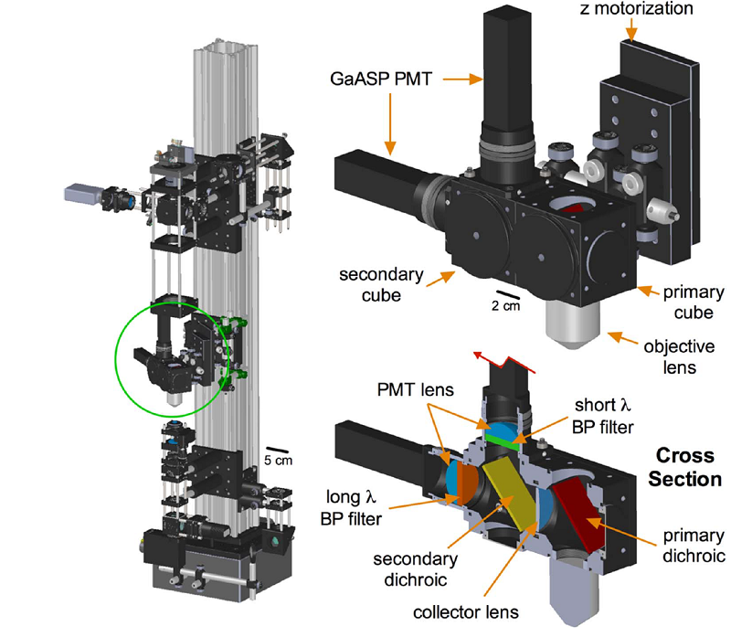 A Canadian Open Source Two Photon Microscope System
